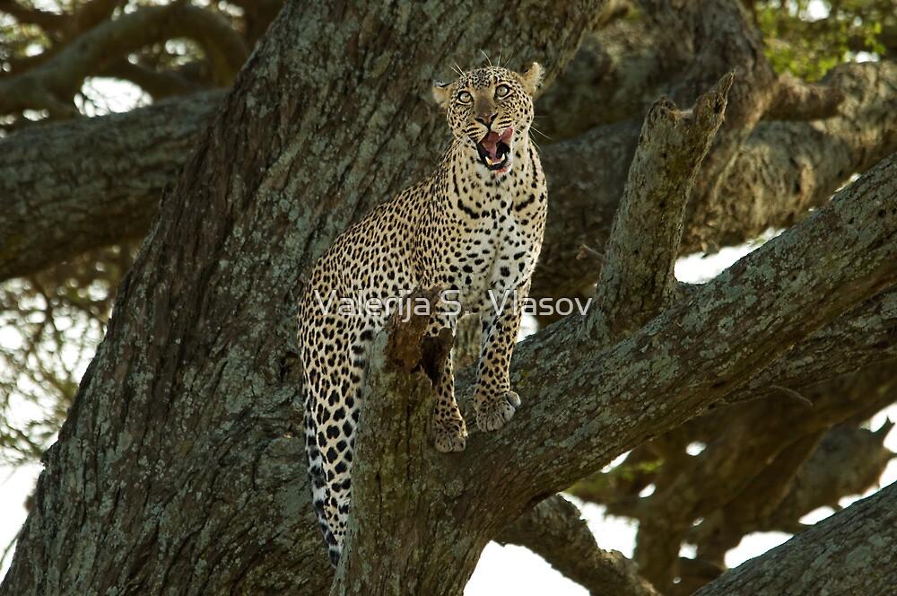 Leopard on a tree by Valerija S.  Vlasov