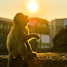 Monkey starring at the sun by MichaelDarn