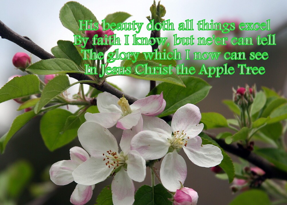 Jesus Christ, The Apple Tree by Paula Tohline  Calhoun