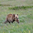 Grizzly by Luann wilslef