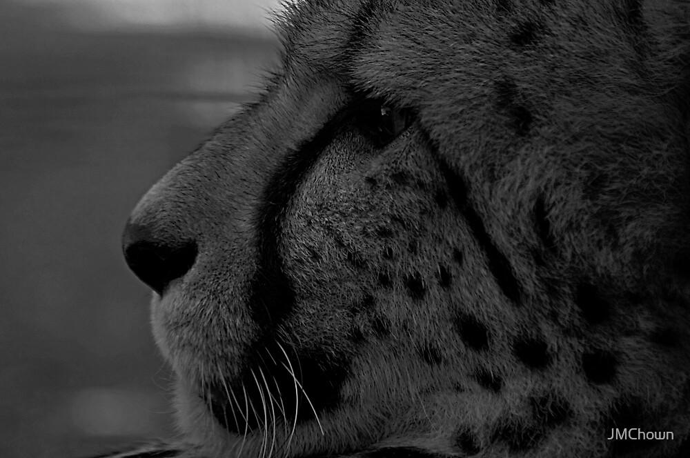 Cheetah Portrait by JMChown