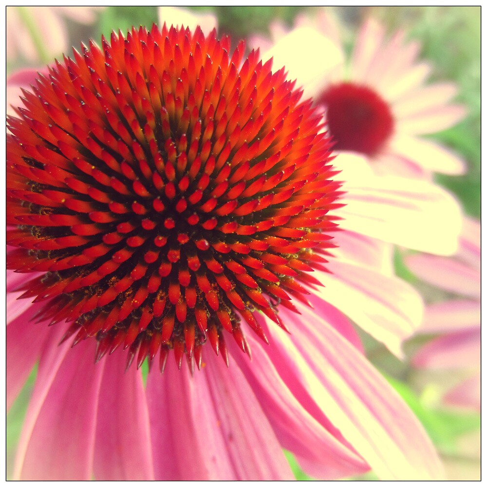 Eye of the Flower by Amy McHugh