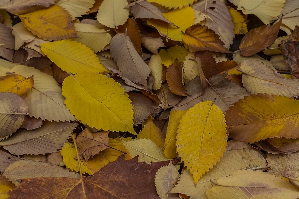 Autumn Leaves  by Richard Thelen