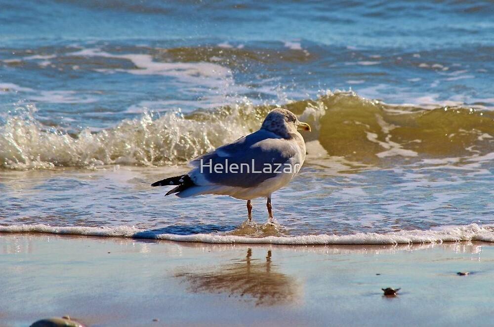 Seagull at Ocean's Edge by HelenLazar