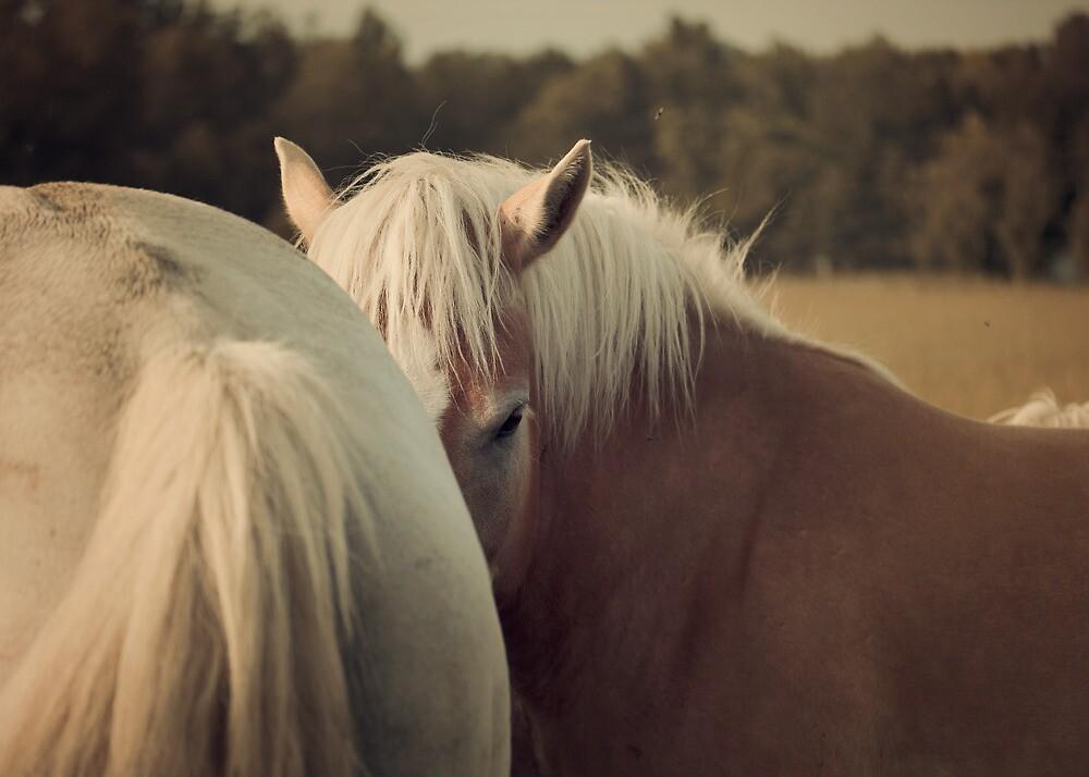 Haflinger Horse Hiding by jamieleigh