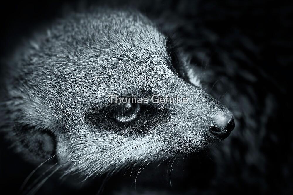 Meerkat or Mere Rat by Thomas Gehrke