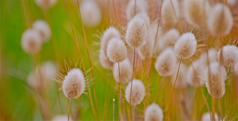 Grasses by Jeff  Farris