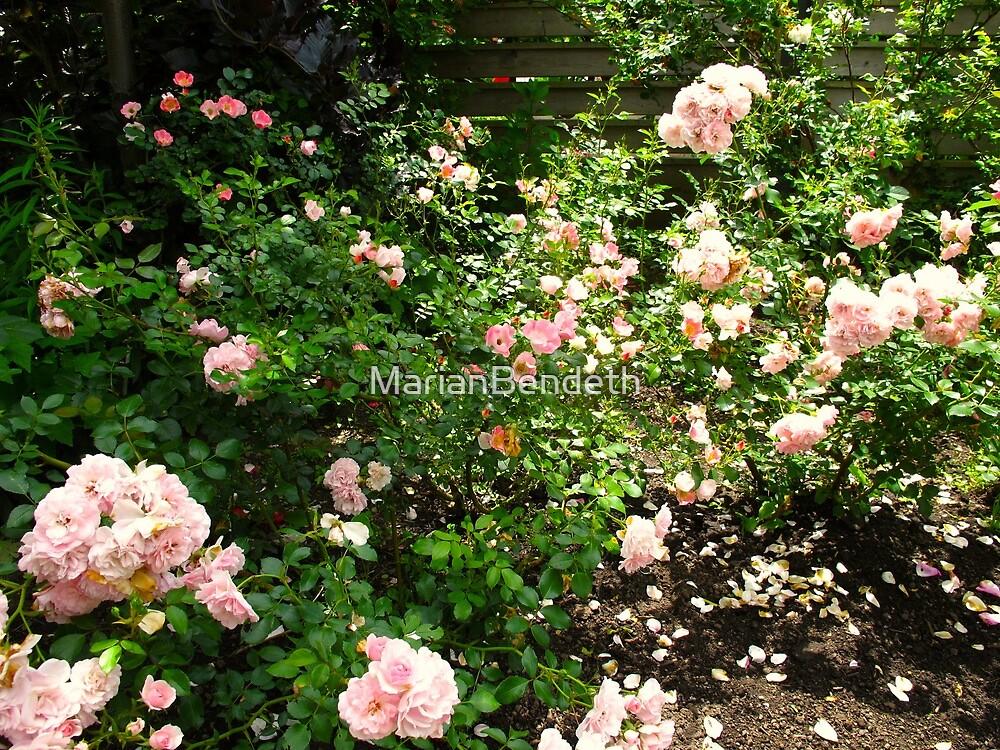 Pink Rose Garden by MarianBendeth