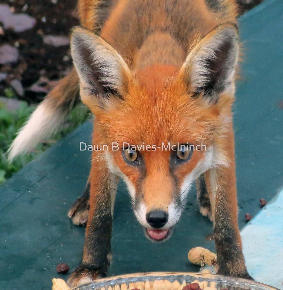 Birdie the Fox by Dawn B Davies-McIninch