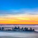 Beautiful Forest On Sunrise by GrishkaBruev