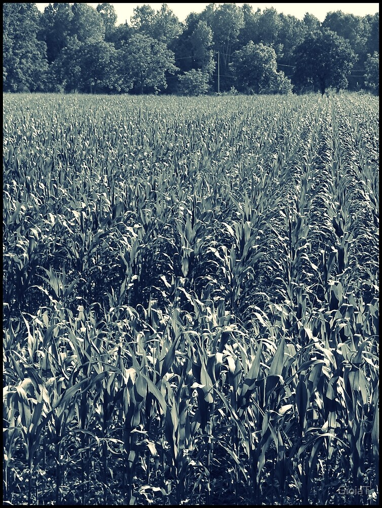 Cornfield by GioiaT