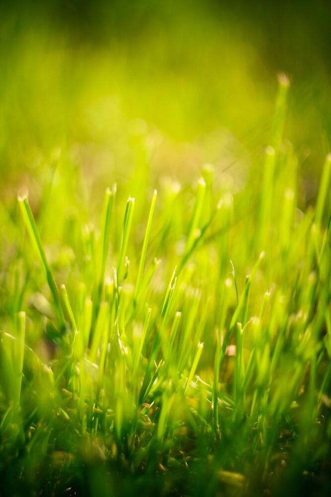 Fresh Spring Green Grass by GrishkaBruev