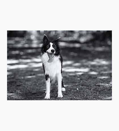 In black & white Photographic Print
