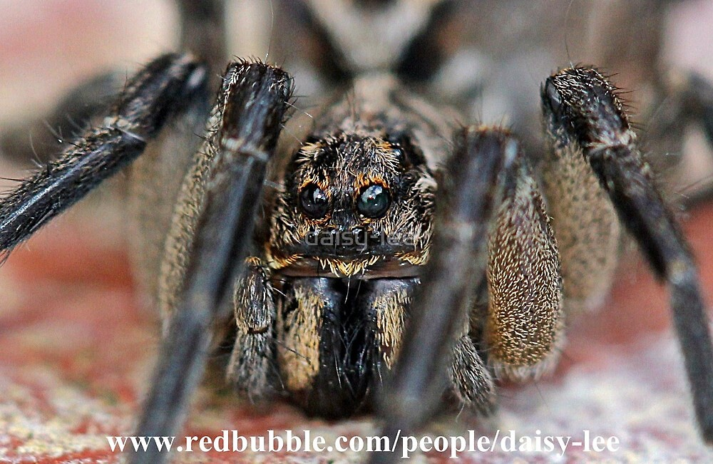 Spider up close by daisy-lee