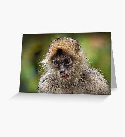 Miserable in the Rain Greeting Card