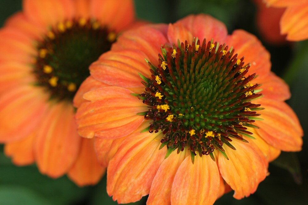 Summer Beauty by Lynn Gedeon