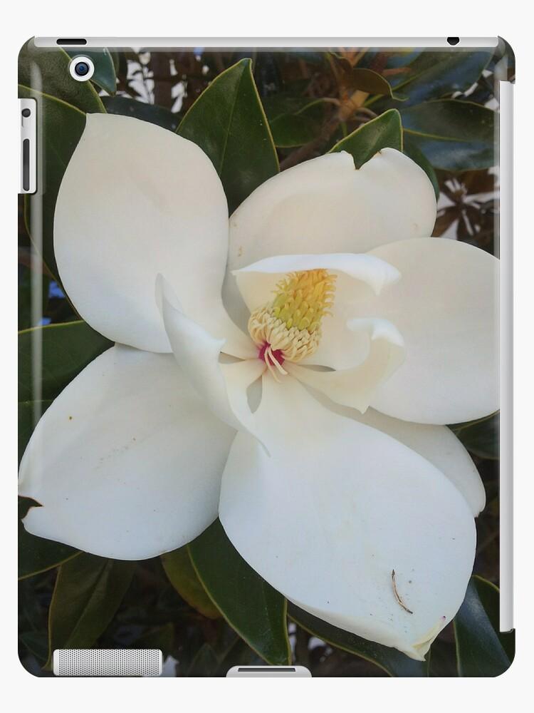 Louisiana Magnolia by Artbytinavaughn