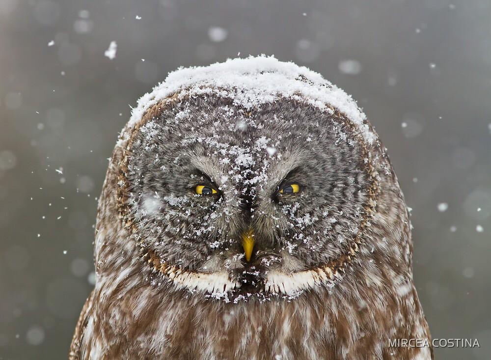 Lapland Portrait by MIRCEA COSTINA