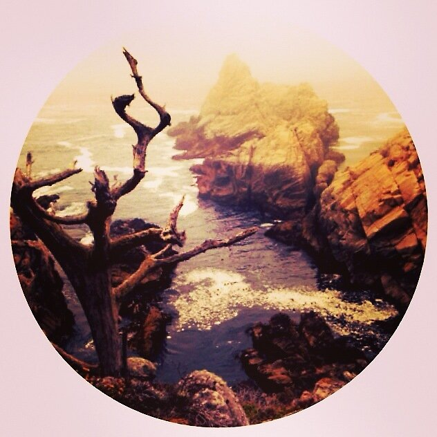 Point Lobos  by Isabelle DeCocco