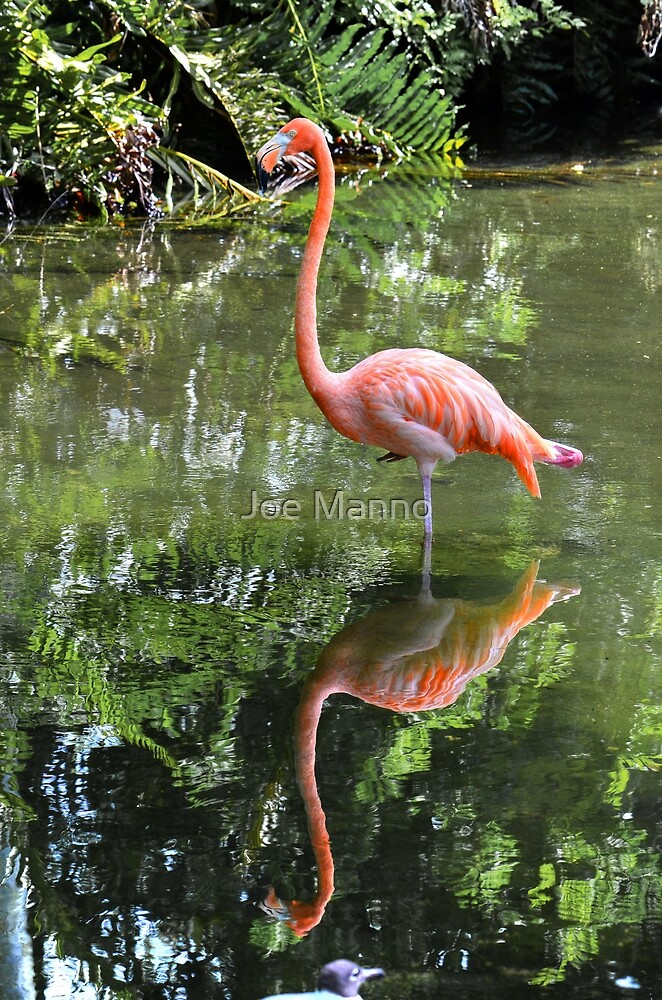 Reflection by Joe Manno