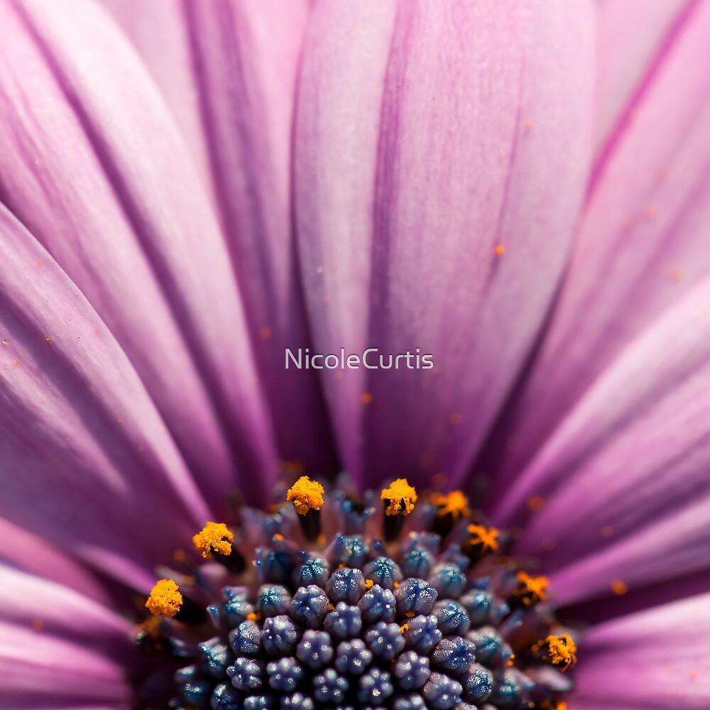 daisy by NicoleCurtis