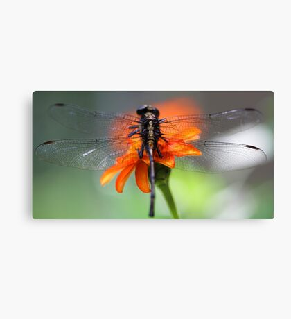 Through The Wings of a Dragonfly Canvas Print