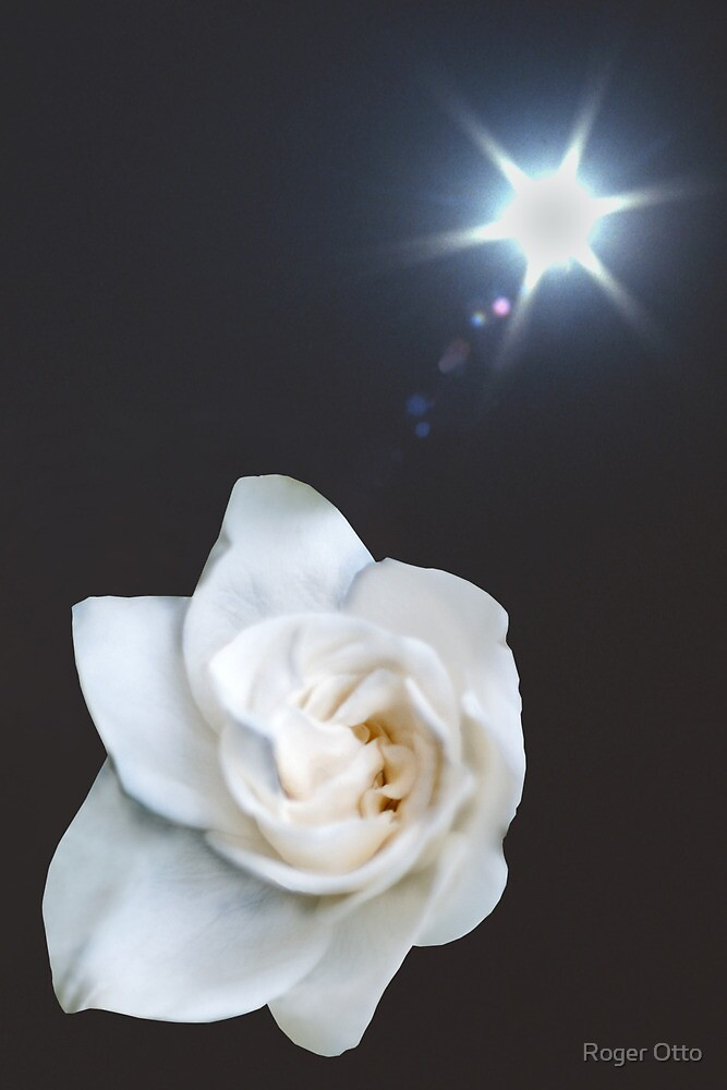 Gardenia over Sun Burst by Roger Otto