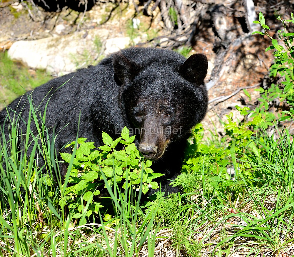 Mom Black Bear by Luann wilslef