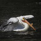 pelican bathtime by Alex Call