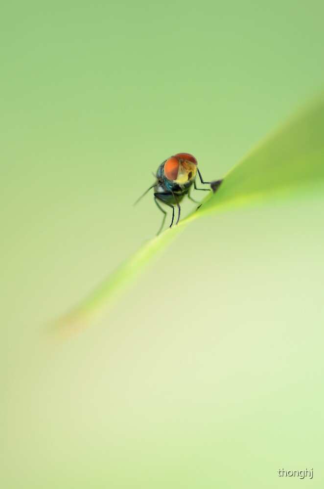 Macro Fly by thonghj