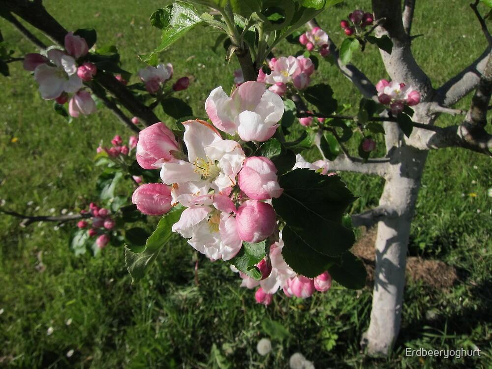 Apple blossom by Erdbeeryoghurt