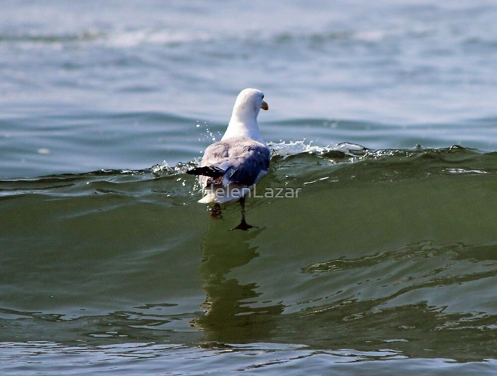 Seagull  by HelenLazar