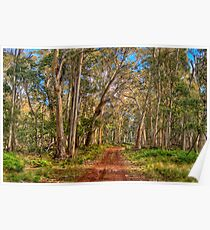 Gum Tree Magic - Coolah Tops National Park NSW - The HDR Experience Poster