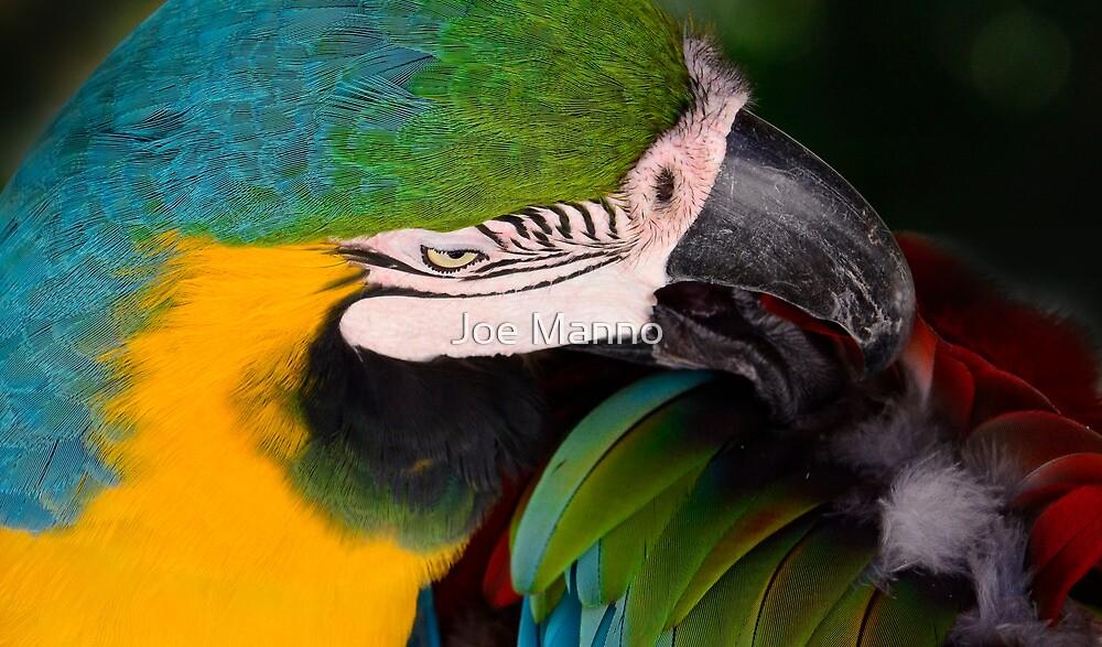 Preening by Joe Manno