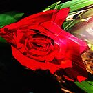 Red Rose by Terri Chandler