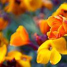 Like a Wallflower by Paul-M-W