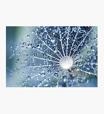 Droplets. Photographic Print
