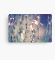Outback Wildflower Leinwanddruck