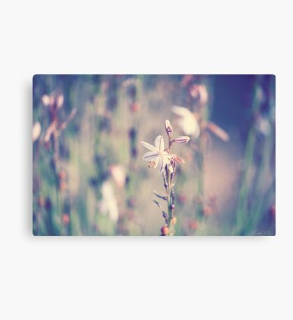 Outback Wildflower Canvas Print