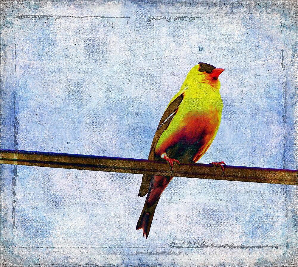 Goldfinch by angelandspot