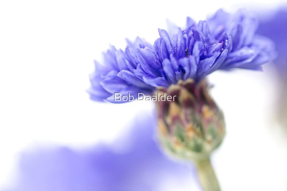 Blue Beauty..... (3) by Bob Daalder