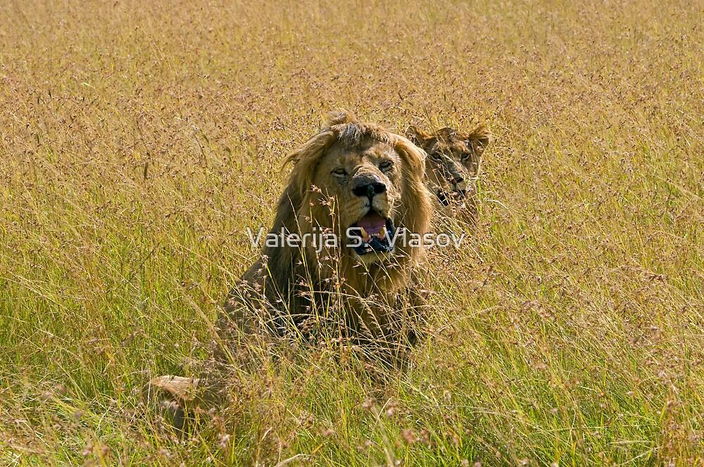 Lion and lioness by Valerija S.  Vlasov