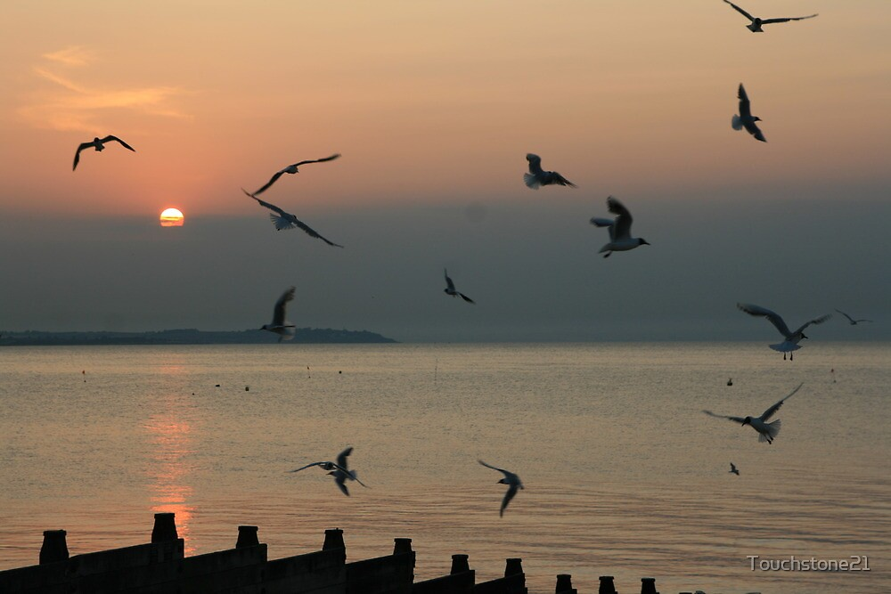 Whitstable Seagulls at Sunset by Touchstone21
