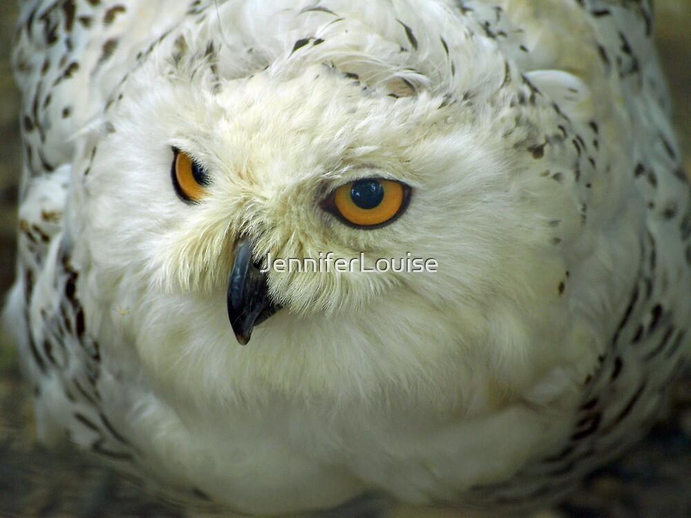 Snowy Owl by JenniferLouise