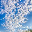 Arizona Beauty by Judi FitzPatrick
