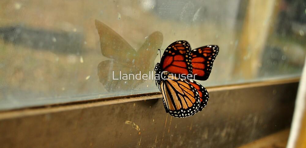 Staring At My Reflection  by LlandellaCauser