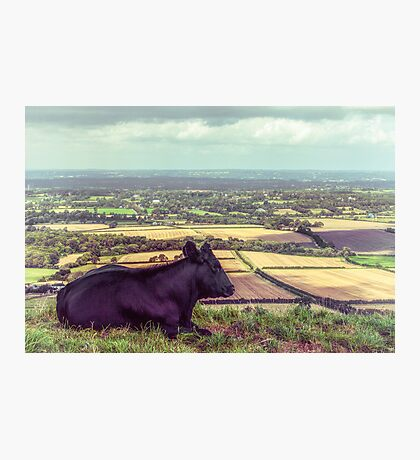 Daisy Enjoys the View from Truleigh Hill Photographic Print