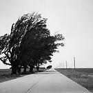 Oklahoma Route 66, 2012, B&W. by Frank Romeo