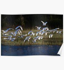 Heading To Roost Poster