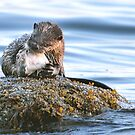 Otter with Flounder by Carl Olsen